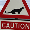 Caution! Otters crossing!